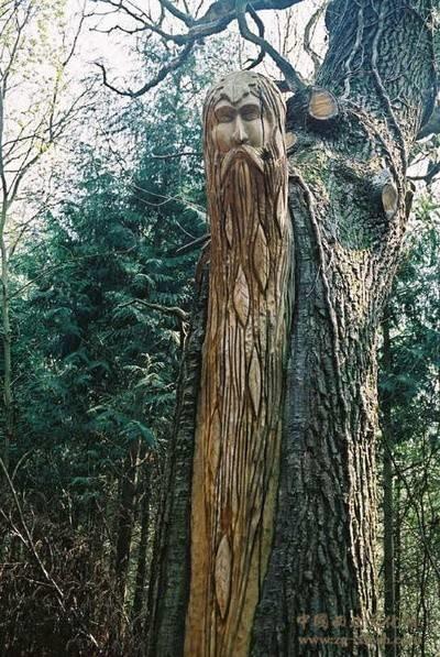 树木雕刻 (23)