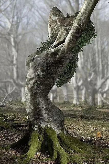树木雕刻 (5)